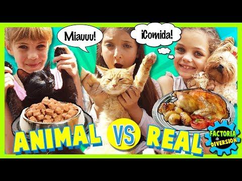 ¡¡RETO  COMIDA MASCOTAS vs COMIDA REAL  !! ANIMAL FOOD CHALLENGE ???? Retos con COMIDA ASQUEROSA