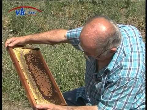 Proizvodnja pčelinje matice - Branko Kaurin