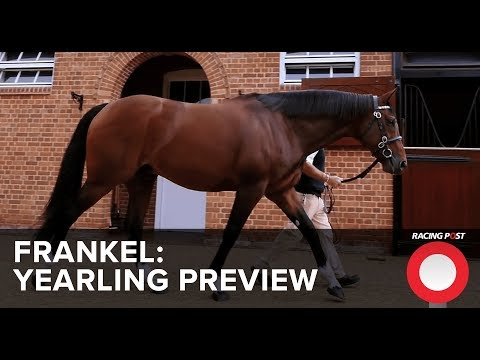 Frankel Yearling Preview from the Racing Post