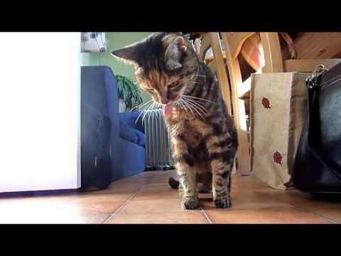 WATCH: Cats Puke to Techno