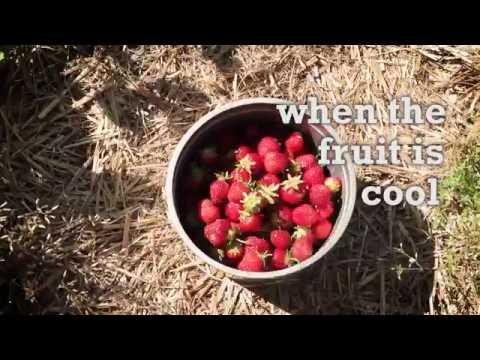 Savor Door County - Strawberry Shortcake