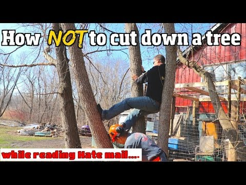 How NOT to cut down a tree -6 common Mistakes