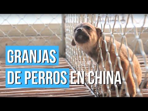 La organización 'Igualdad Animal' denuncia el maltrato de perros y gatos en China