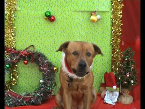 Merry Puppy Christmas :: Dogs Singing Christmas Carols