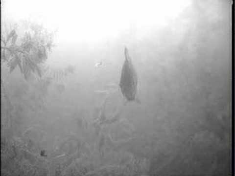 Ice Fishing – Jigging Sunfish/Bluegill