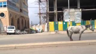 abused, neglected horses p1