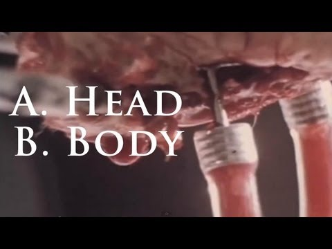The Midnight Archive - A. Head B. Body