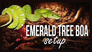 EMERALD TREE BOA SETUP by Jossers Jungle