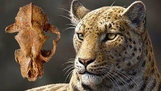 Big Cat - Evolution