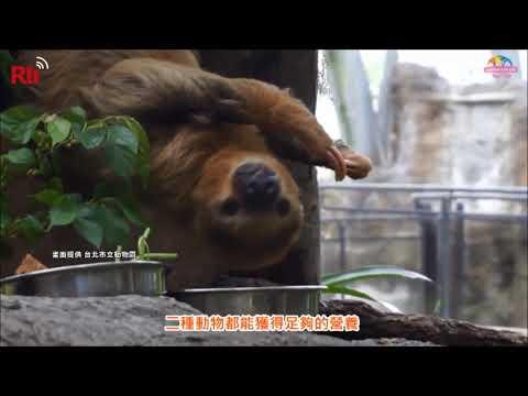 Taipeh/Taiwan: Tropenwaldpavillon mit Affenwald eröffn ...