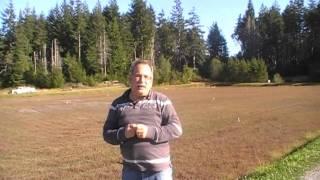 #269 Moosbeeren Cranberries als Bodendecker Teil 3/4 (USA, 2010)