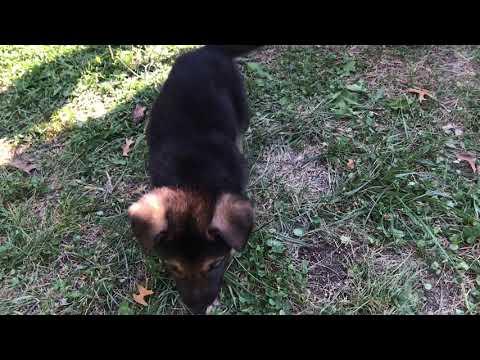Kiaras Mr. Cinnamon Vanilla Video 2