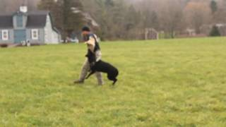 TRAINING PROTECTION ROUTINE FOR SCHUTZHUND BY YOURSELF