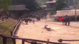 Funny Elephant Walking Chiang Mai Thailand