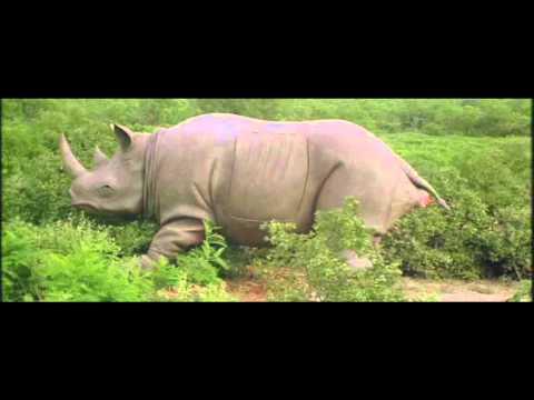 Смо��е�� онлайн видео ace ventura 2 rhino birth scene