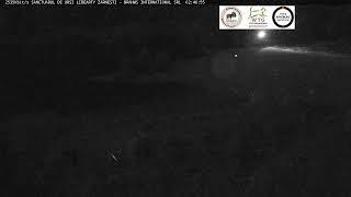 WOW! Sanctuarul de ursi de la Zarnesti. Cel mai mare din lume! LIVE!