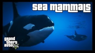 GTA 5 Wildlife Documentary  Sea Mammals In this film, we shall be observing some of the remarkable behaviours of the biggest animals to roam the oceans of GTA 5.» Don't forget to like the video and subscribe to the channel for more ridiculous videos like the one you've just seen.» Support me by becoming an 8-Bit Bastard Patreon, you'll gain access to exclusive content! https://www.patreon.com/8BitBastardStay Connected!• Twitter: https://twitter.com/8Bit_Bastard• Patreon: https://www.patreon.com/8BitBastard• Facebook: https://www.facebook.com/8BitBastard/