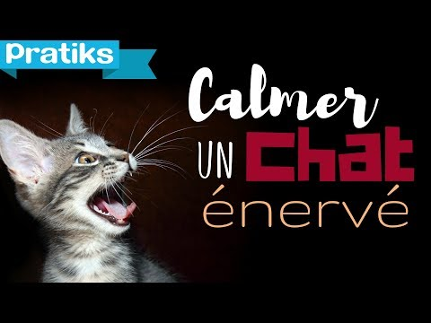 Méthode pour calmer un chat énervé ?