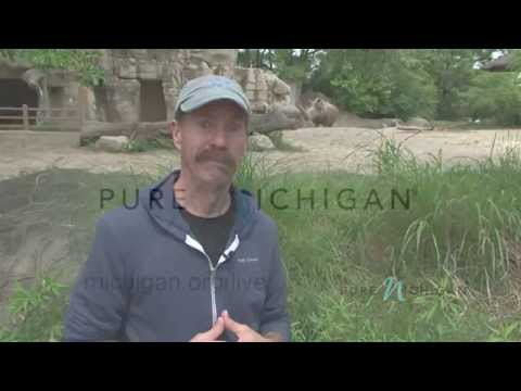 Join Pure Michigan and Under the Radar for a virtual trip at the Detroit Zoo