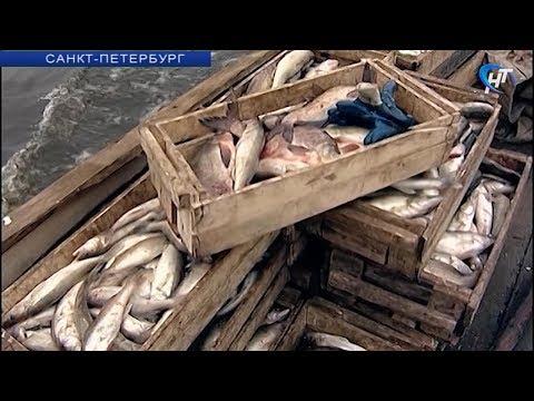 Ученые провели экспертизу биоресурсов озера Ильмень