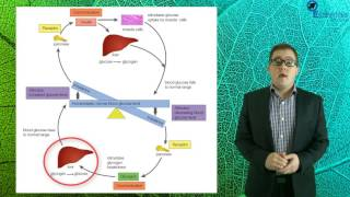 Essentials Concept Video - Endocrine System