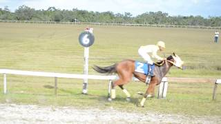 Horse Race Castleton Race Track  September 9, 2018 Untried 2 Year old Thoroughbreds 4 Furlong