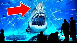 That's Why No Aquarium In the World Has a Great White Shark
