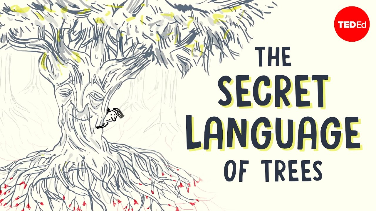 The secret language of trees | TED-Ed
