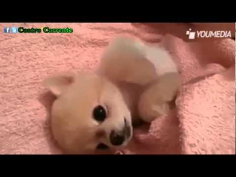un cucciolo tenerissimo che ha già capito la parte migliore della vita!