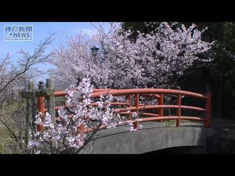 大鳥居と色彩競い おのころ島神社
