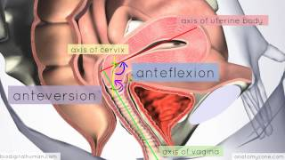 Introduction To Female Reproductive Anatomy Part 3 - 3D Anatomy Tutorial