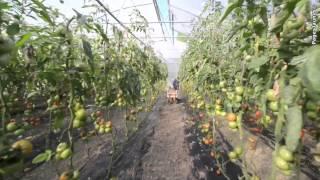 Angoulins-sur-Mer France  city photo : Les Serres des l'Anglois à Angoulins-sur-Mer, production de fruits et légumes Bio