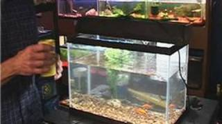 Fish Tank Maintenance : Putting Food In Fish Tanks