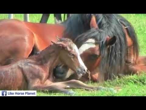 Video Horse giving birth download in MP3, 3GP, MP4, WEBM, AVI, FLV January 2017