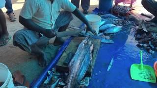 Kollam India  city images : Fish cutting in Kollam, Kerala