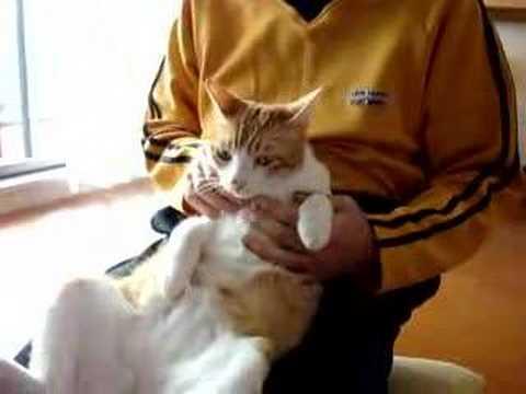 「[ネコ]だら~ん。完全な無気力で人間の膝の上に乗るネコ。」のイメージ