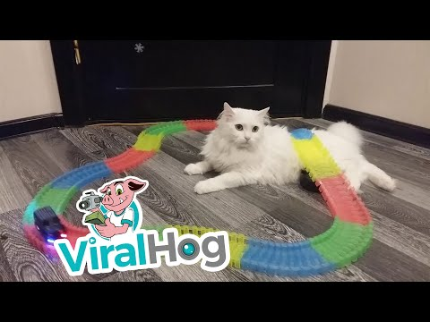 Rento kissa – Train Track Cat