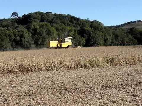 Colheita safra 2008/2009 Fazenda Santa Maria Ciríaco - RS