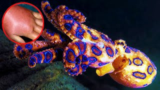 Most Venomous Sea Creatures In The World by Epic Wildlife