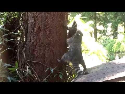 Így lehet megtanulni fára mászni