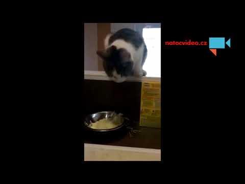 když kočka krade sýr na špagety