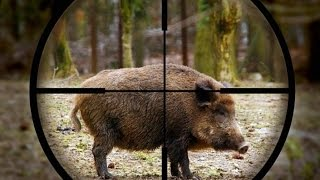 Video Excellent hunting for wild boar. a selection videos of real hunt. the best MP3, 3GP, MP4, WEBM, AVI, FLV Februari 2019