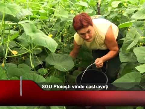 SGU Ploiești vinde castraveți
