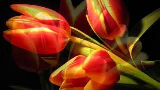 Download Lagu My flowers (still life ).wmv Mp3