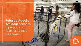 Animais resgatados em Mariana esperam um novo lar em feira de adoção