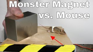 Video What Does a Giant Monster Neodymium Magnet do to a Mouse? MP3, 3GP, MP4, WEBM, AVI, FLV April 2018