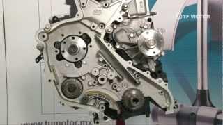 Sincronización de Motor Nissan YD25 2.5 lts - Cabstar, Frontier, D22 Pick Up