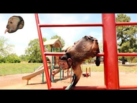 Monkey Visits PlayGround!