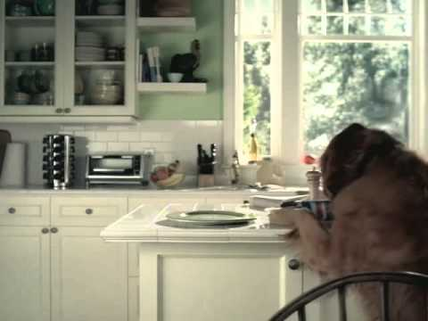 A kutya okos állat... a macska pedig itt áldozat...