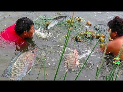 Videos caseros - ASÍ PESCAN A LOS PECES DE AGUA DULCE CON RED - Fish Hunting
